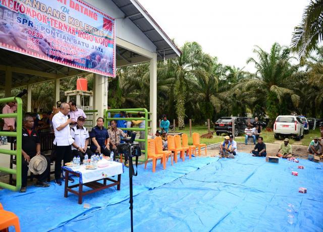 Gubri Serahkan Sapi Kepada Peternak Saat Tinjau Kandang Kolektif Kelompok Ternak Rojo Royo Desa Pontian Mekar, Kec Lubuk Batu Jaya, Kab Inhu