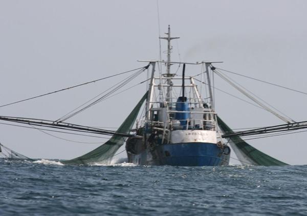 Dua Titik Perairan Riau Rentan Illegal Fishing Berita Website